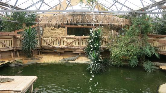 mississippi alligatoren bild von crocworld erfurt. Black Bedroom Furniture Sets. Home Design Ideas