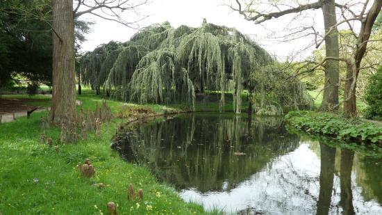 Arboretum de la Vallée-aux-Loups: Cèdre bleu pleureur de l'Atlas