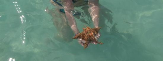 Bayahibe, Δομινικανή Δημοκρατία: Stella marina