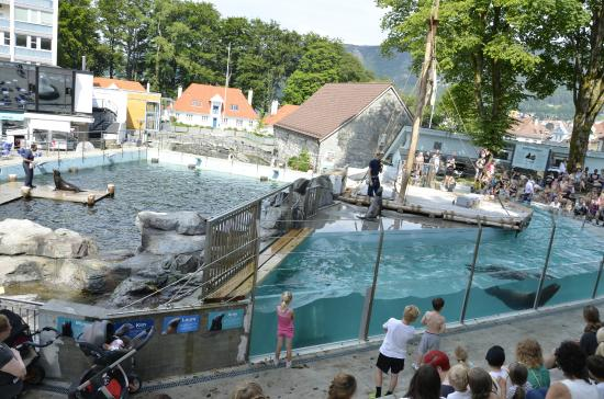 ... swims in a pool - Picture of Bergen Aquarium, Bergen - TripAdvisor