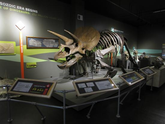 Buffalo Museum of Science: Explore dinosaurs and fossils in the Rethink Extinct exhibit.