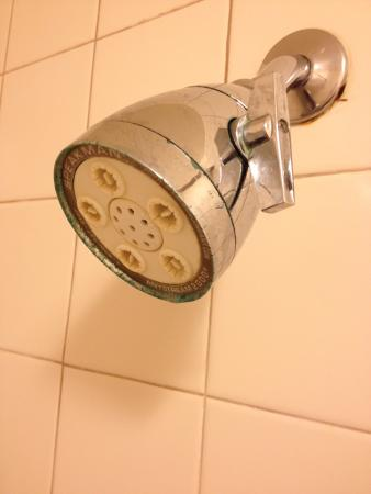 how to clean shower head clr