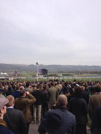 cheltenham gold cup week