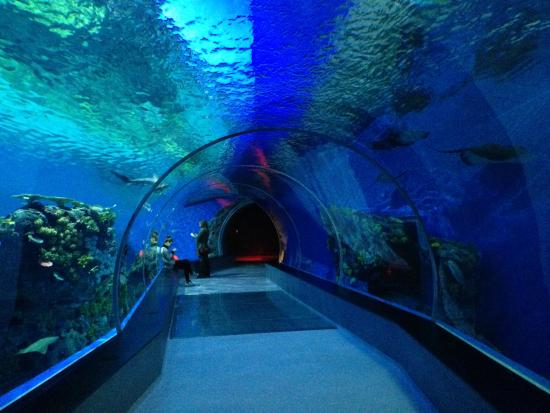 ... of Den Bla Planet, National Aquarium Denmark, Copenhagen - TripAdvisor