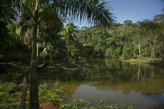 Laguna del Lagarto Lodge: lagoon view