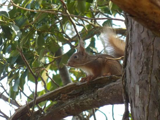 Merlin Woods Park: Merlin Woods is home to the Red Squirrel
