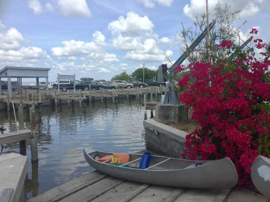 Chokoloskee, FL: Nice flowers at the marina!