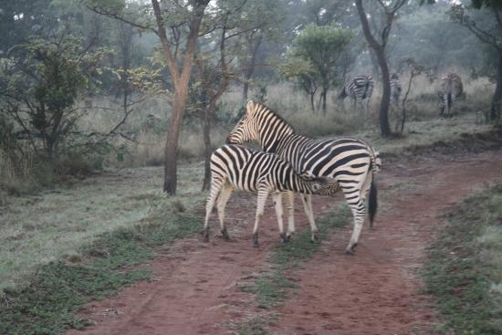Kololo Game Reserve: Game drive