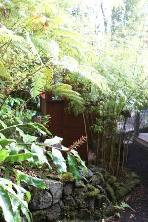 Volcano Mist Cottage: Outdoor shower