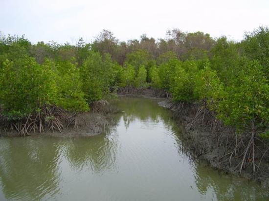 Pranburi River: Is dit een teken van rust of niet?