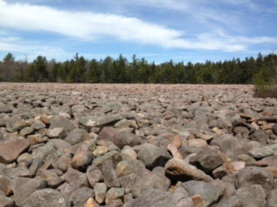 Pocono Mountains Region, Pennsylvanie : Boulder Field