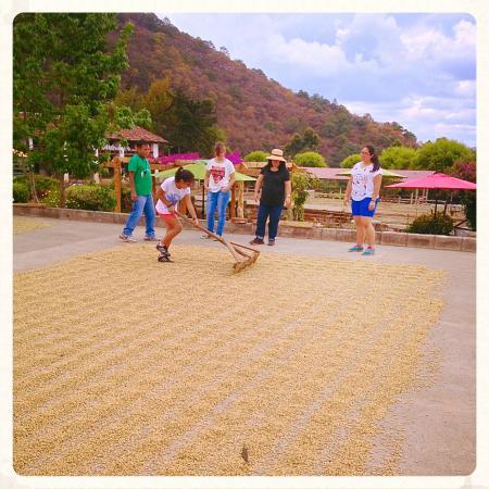 Sumpango, Guatemala: Tour del Café