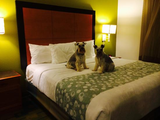 La Quinta Inn & Suites Tampa Bay Clearwater AP: King suite