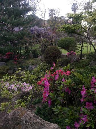 Flores picture of el jardin japones de montevideo - Plantas para jardin japones ...