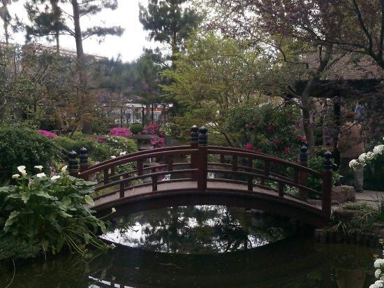 Vista desde el interior foto di el jard n japones de - Jardin japones interior ...