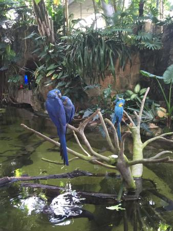 Moody Gardens Galveston All You Need To Know Before