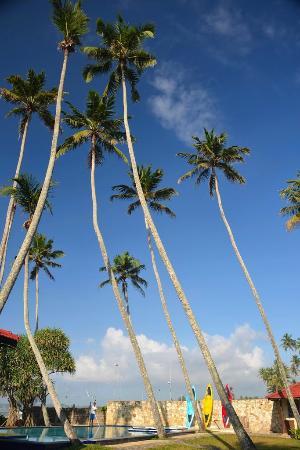 Weligama Bay Resort : Бассейн