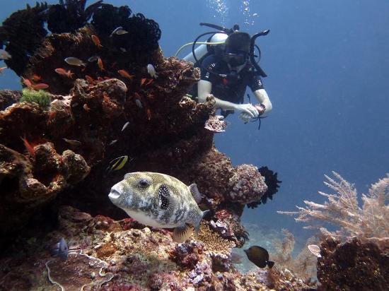 Blue Marlin Dive Gili Trawangan ภาพถ่าย