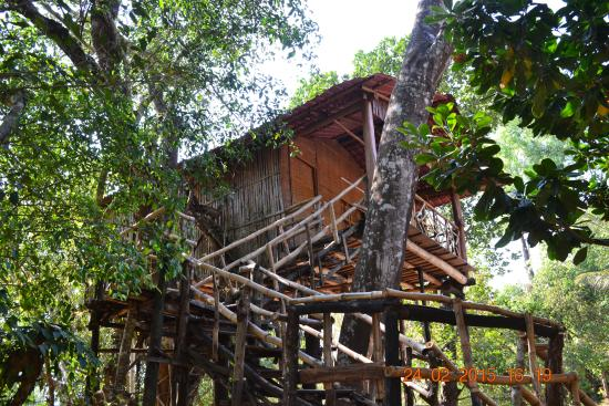 Silent Valley Resort: Tree House