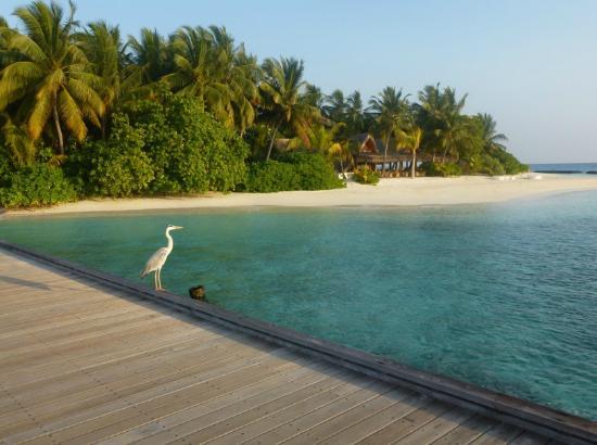 Kuramathi Island Resort Grounds Picture Of Kuramathi Maldives Tripadvisor