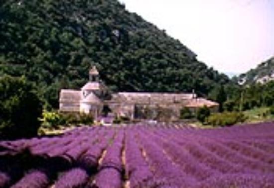 Camping des Sources : L'abbaye de Sénanque