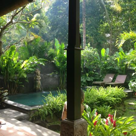 Beautiful private pool garden area picture of cocoa for Garden pool villa ubud