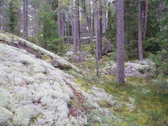 Bjornnasets naturreservat