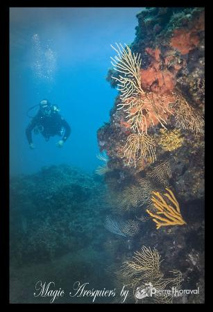 Bon cadeau Picture of Plongee Passion Frontignan TripAdvisor