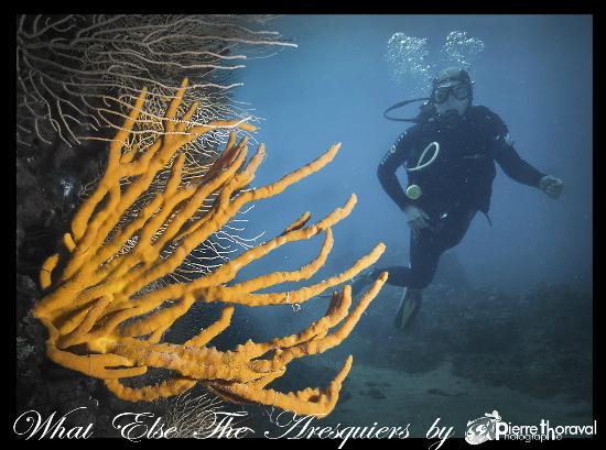 Plongee Passion