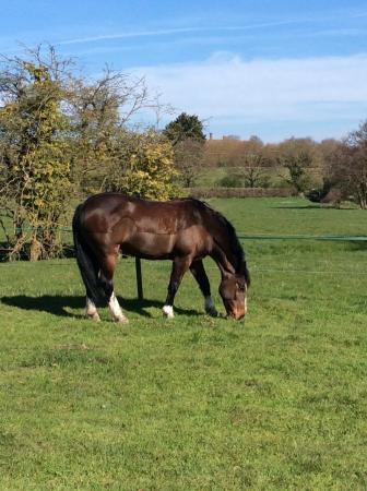Old Hall Farm Cottages: Mo enjoying Spring sunshine on her back!