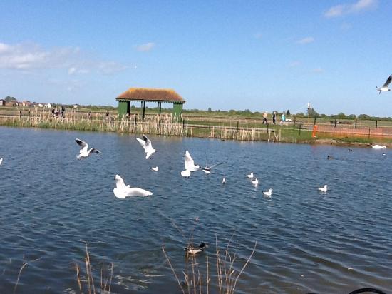 Lots Of Birds Picture Of Promenade Park Maldon Tripadvisor