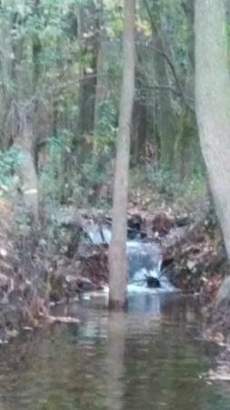 Blackwater River State Recreation Area : Pretty little waterfall