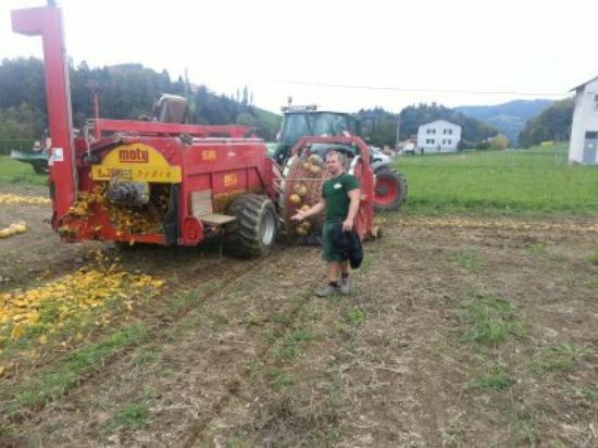 Leutschach, Austria: Ernte