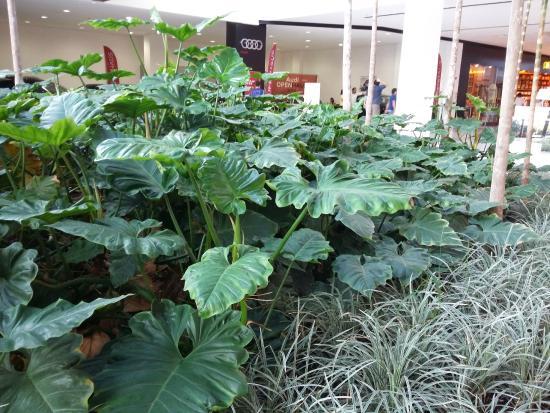 Iguatemi Esplanada  Quiosque espalhados pelo shopping. Iguatemi Esplanada   Lojas de grifes famosas. Iguatemi Esplanada  Arborizado 1adb68e757