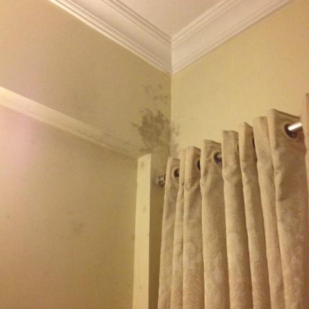 Hotel Kemps Corner: mold in room