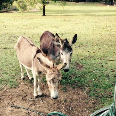 Morvern Valley Guesthouses: Making friends