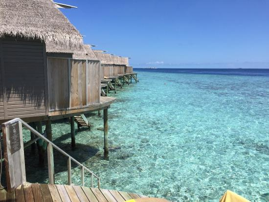 show user reviews centara fushi resort maldives male