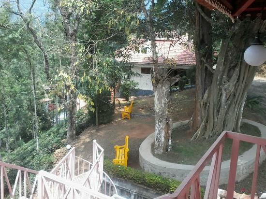 banyan tree more than 200 years aged.