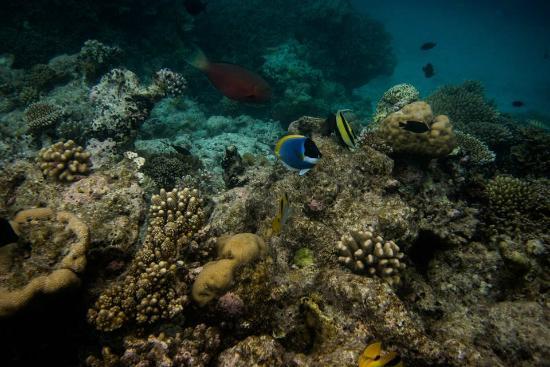 Veligandu Island Resort & Spa: Snorkeling just outside our water villa