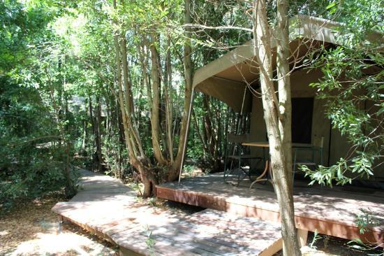 Tri Active's Kunguru Lodge: Pathways to Forest Walk rooms