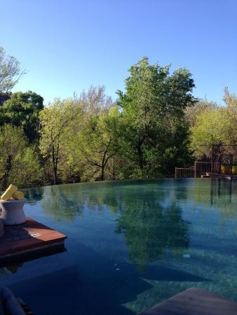 Amara Resort & Spa, a Kimpton Hotel : Infinity pool
