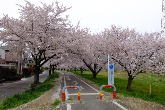Saitama Prefectural Road 157 Kawagoe Sayama Bike Trail