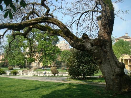 Vista tra i rami contorti della catalpa foto di giardini - Giardini fantastici ...