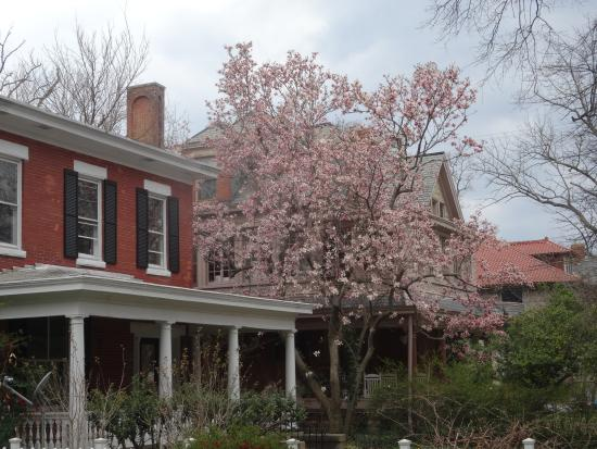 Museum District Bed & Breakfast: Cherry blossom