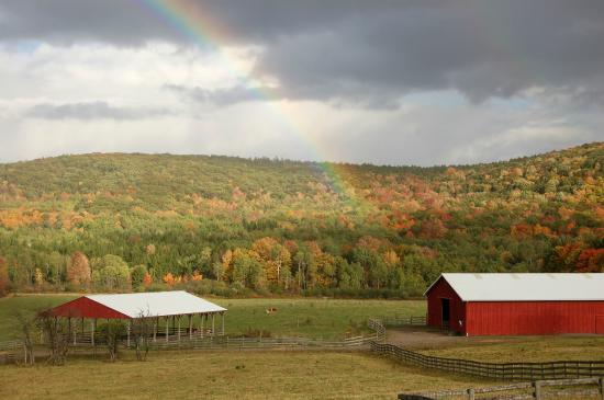 Farm Sanctuary: If there was a heaven for farm animals, this would be it.