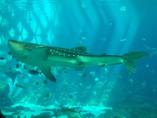 乔治亚水族馆