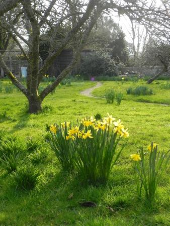 Monk's House - National Trust: Early spring flowers in the garden
