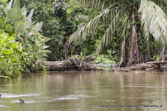 Hotel Miss Junie's: Rainforest