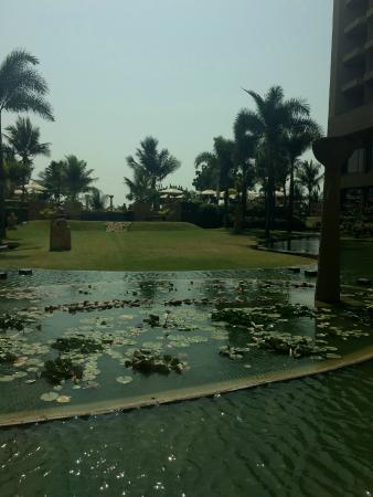 Lotus Cafe: The view of the pond
