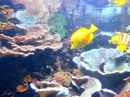 Achei O Nemo Picture Of Sea Life London Aquarium London